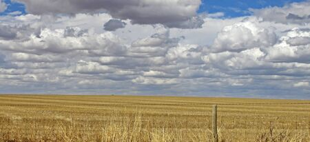 Wheat Field South Australia Stock Photo