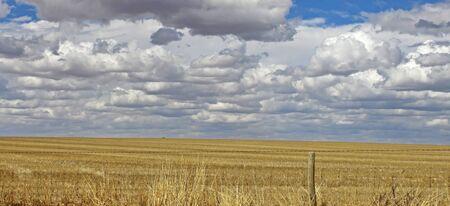 Wheat Field South Australia Stock Photo