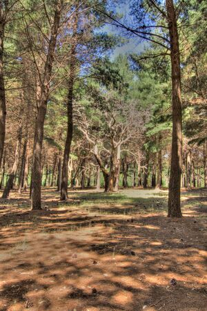 Forest HDR