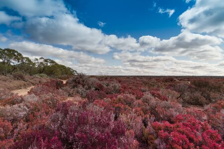 Native Flowers Murray Sunset National Park South Australia