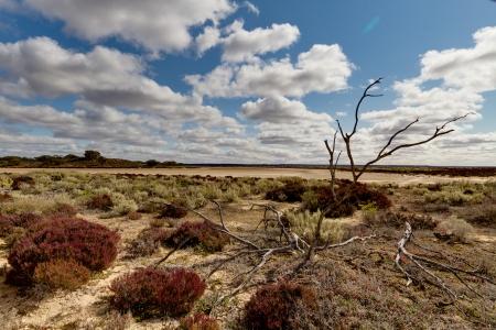 Salt Lake and Native Flowers Murray Sunset National Park South Australia