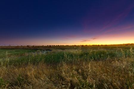 Hay Bales Under Evening Sky Stock Photo