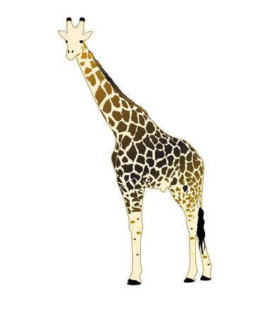 giraffa: Giraffe Ilustraci�n