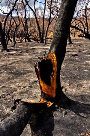 bush fire: Bush Fire Destruction Grampians National Park
