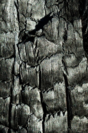 Burnt Tree Texture Stock Photo