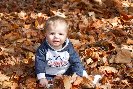 Ten month old baby boy playing in Autumn leaves