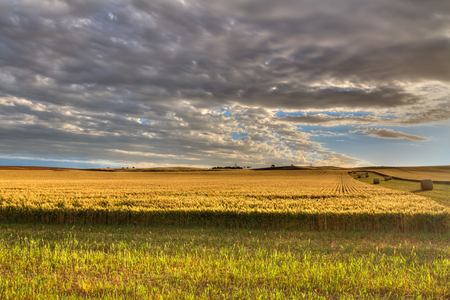 Wheat Field with bales of Hay Stock Photo