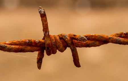 fencing wire: Barbed Wire Macro Stock Photo