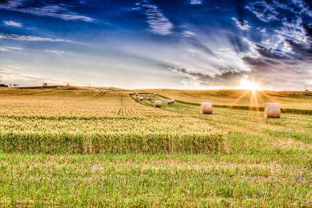 Hay bales sitting amongst Wheat crops at sunset
