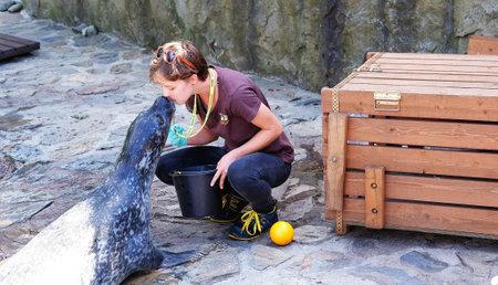 Wroclaw, Poland 08/24/2020. Woman kissing Phoca vitulina 'Harbor Seal' at the zoo.