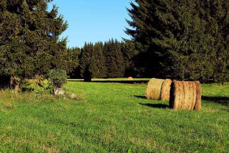 Hay bales in a meadow in late summer. Landscape Standard-Bild