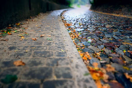 cobble street in the rain with yellow fallen leaves - selective focus background