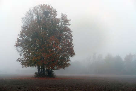 Foogy autumn landscape with solitarytree and copy sapce