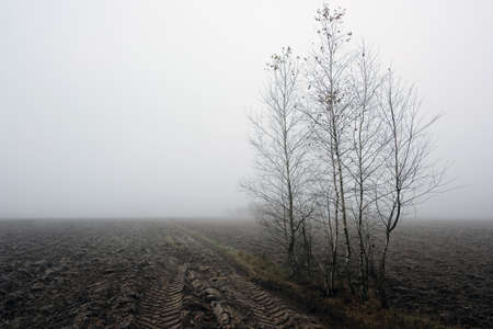 Landscape with fog over field with bare trees in autumn in Poland