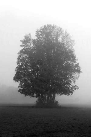 Lonely tree in the mist in autumn. Vertical landscape Standard-Bild