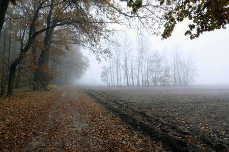Foggy road on the egde of a forest. Melancholic autumn landscape