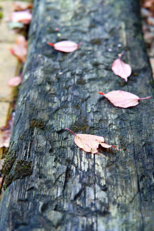 dry fallen leaves lying on old wooden pathway