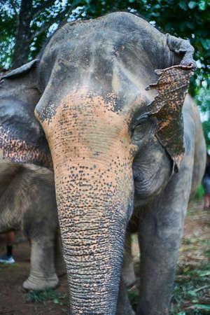 Detail of elephants head
