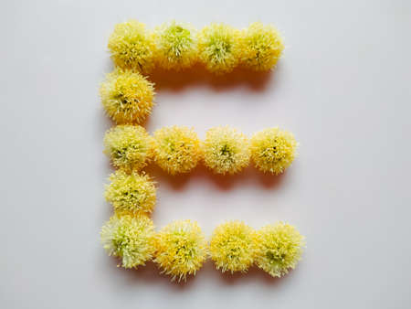 Letter E alphabet made with Leucaena leucocephala or river tamarind flowers over white background Banco de Imagens