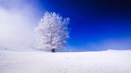 Beautyfull snowy landscape with snow covered tree 스톡 콘텐츠