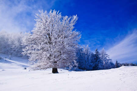 Beautifull winter  landscape with snow covered trees and fog