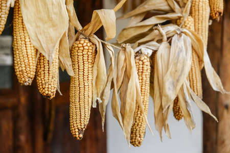 peasant: Decorative corn in hanging in a traditional peasant house Stock Photo
