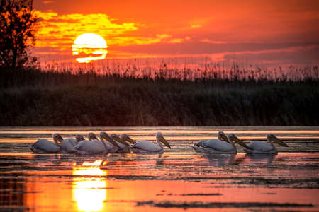 Delta Dunarii, Romania Reklamní fotografie