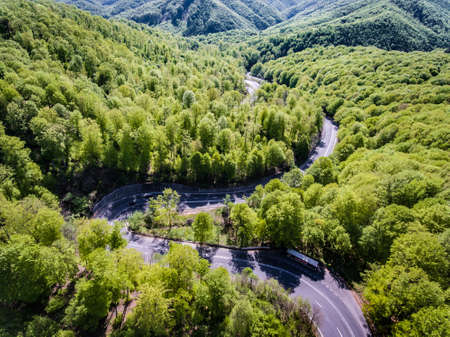 Forest curved road