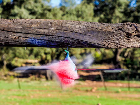 Balloon filled with water exploding when hit by an arrow. Closeup hi-speed shot Stock Photo