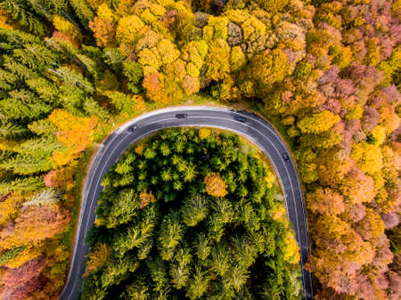 Road trip trough the woods in the middle of the autumn
