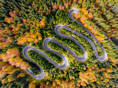 Autumn in the Forest Winding Road Aerial View