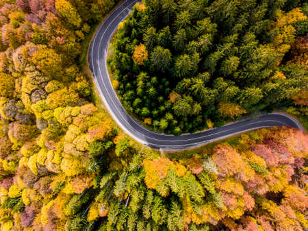 Curved Winding Road in the Forest Stock Photo