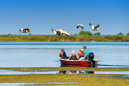 Tourist watching the Pelican Birds wildlife fauna in the Danube Delta
