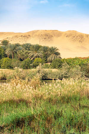 Life full of vegetation on the Nile River near Luxor Thebes Egypt
