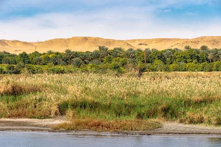 Life full of vegetation on the Nile River near Luxor Thebes Egypt