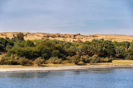 The river bank of the Nile River full of vegetation and the Sahara Desert in the background Stok Fotoğraf