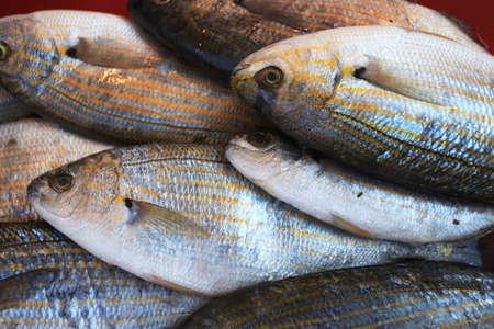 Fish on a Turkey Market photo
