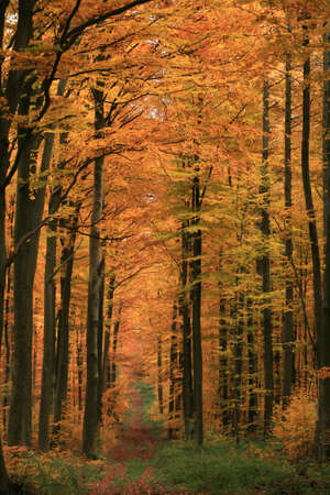 Autumn in Germany photo