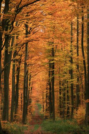 november: Autumn in Germany Stock Photo