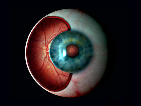 retina: A digital painting depicting the interior of the human eye showing the retina behind the iris. Illustration