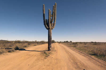 A remote road in Arizona with a Saguaro Cactus growing in the middle of it. photo