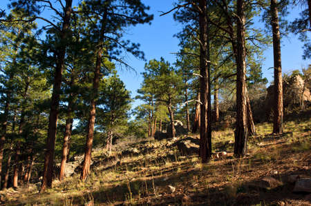 kaibab trail: A sloping view of the Kaibab Forest from the Cliff Springs Hiking Trail near the North Rim of the Grand Canyon.
