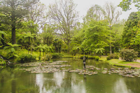 Path with beautiful green colors, lake, pond, stepping stones, trees, grass, moss, foliage, shades of green, Terra Nostra is an area of extreme beauty, with diverse flora, endemic azorean species, and nature of extreme beauty. Standard-Bild
