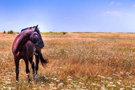 portret: Horse portret