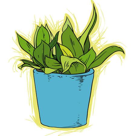 houseplant: houseplant in the pot