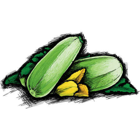 courgette: Courgette