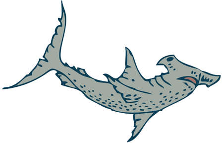 pez martillo: Tibur�n martillo Vectores