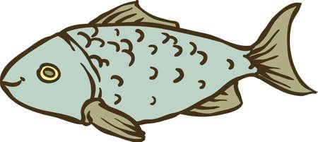 crucian: Fresh Gray Fish Isolated on White Background Illustration