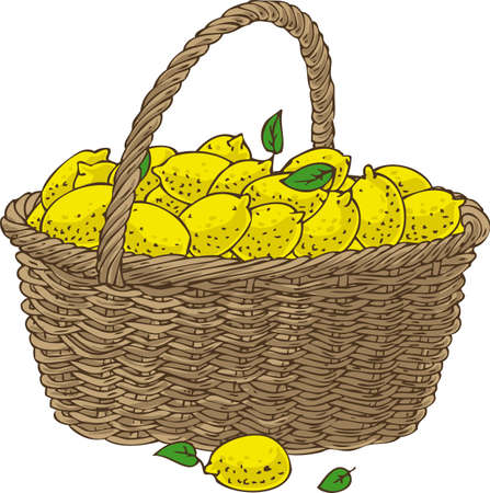 bast basket: Wicker Basket with Ripe Yellow Lemons. Isolated on a White Background
