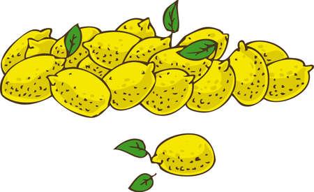 ripe: Ripe Fresh Yellow Lemons. Isolated on a White Background